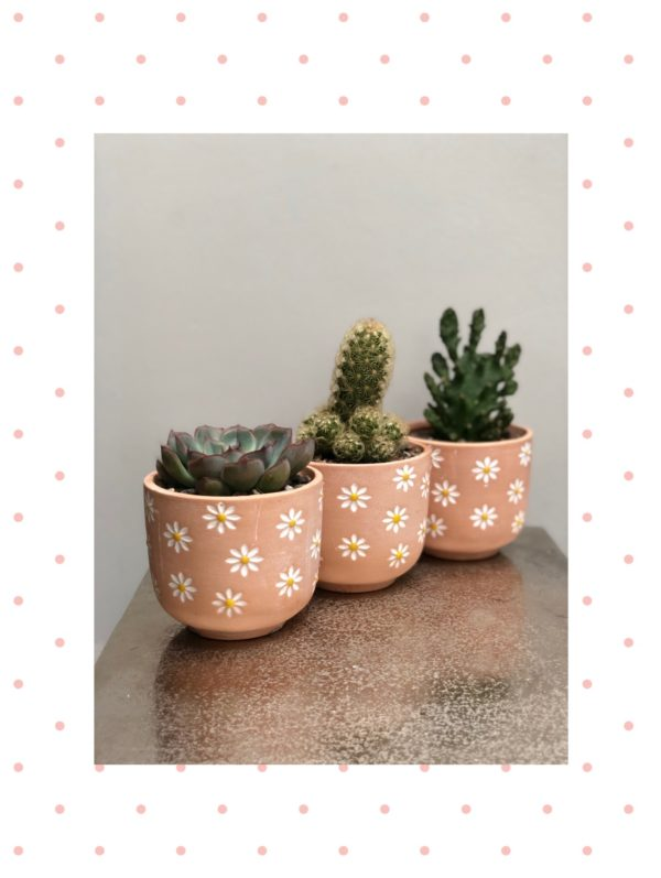 terracotta daisy pots
