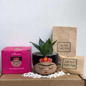Frida Cactus Kit