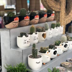 Cactus Parlour