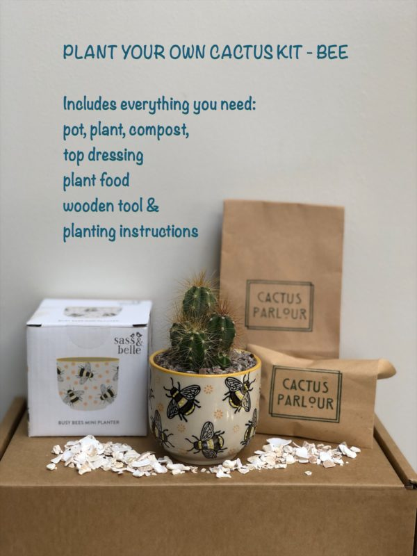 Plant your own cactus kit - Bee