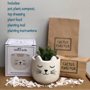 Plant your own cactus kit - cat succulent