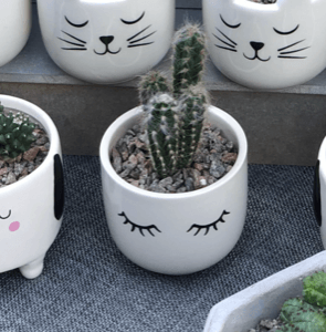 Eyes shut plant pot with cactus