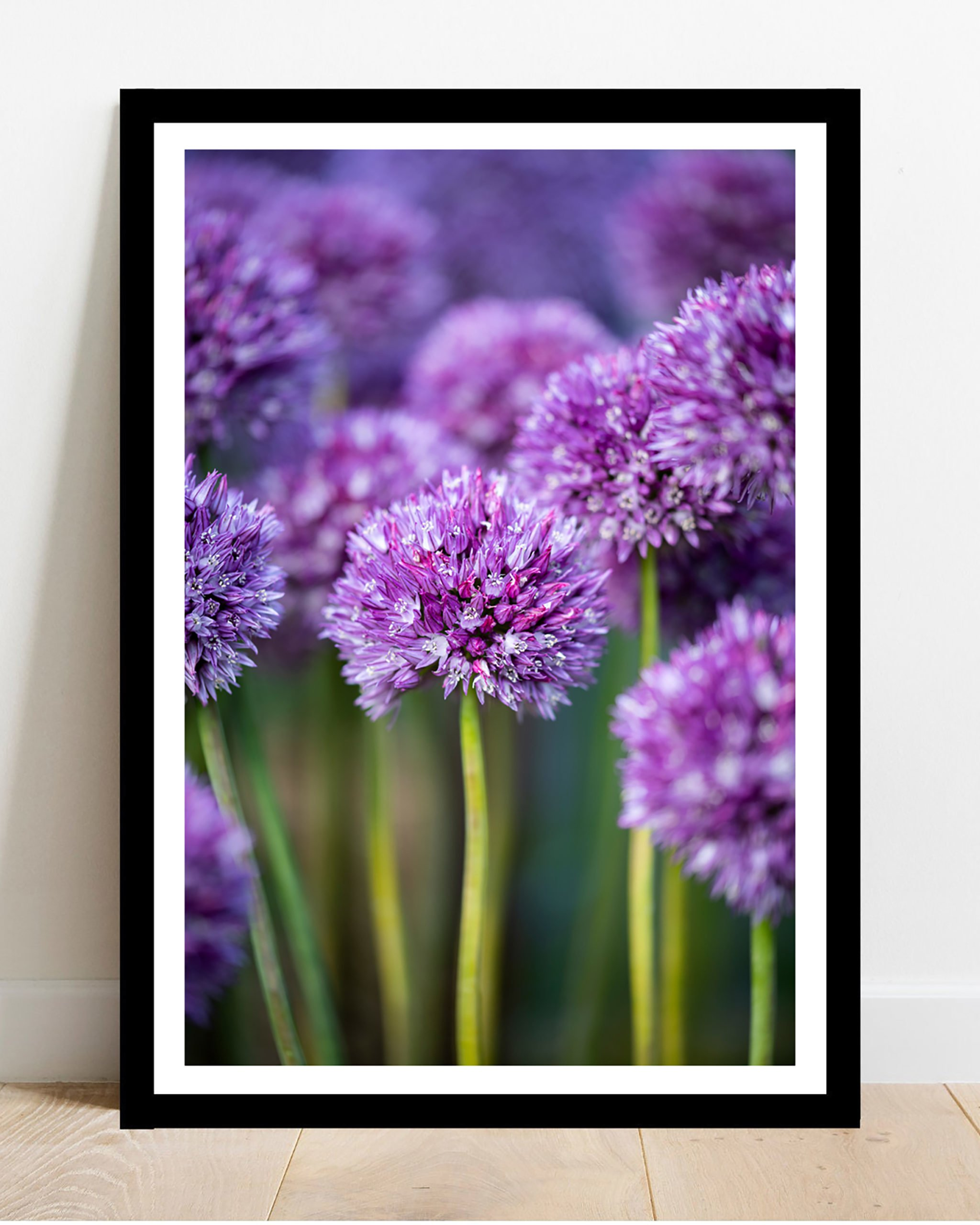 Alliums Fine Art Photography Print The Market Co