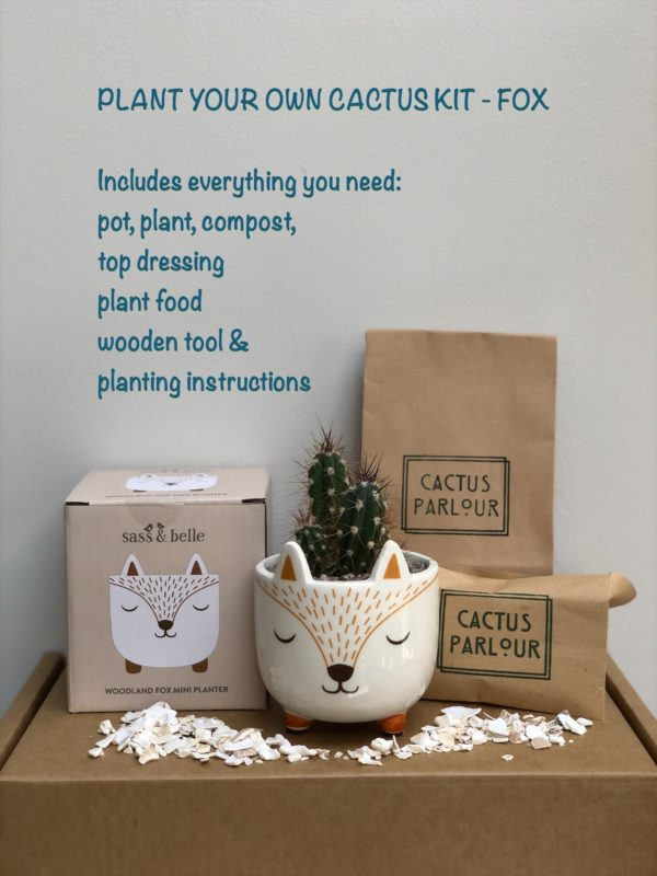 Plant your own cactus kit - Fox