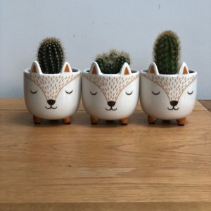 3 cacti in fox plant pots