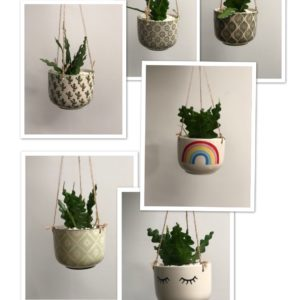 Ceramic hanging planters with fishbone cactus