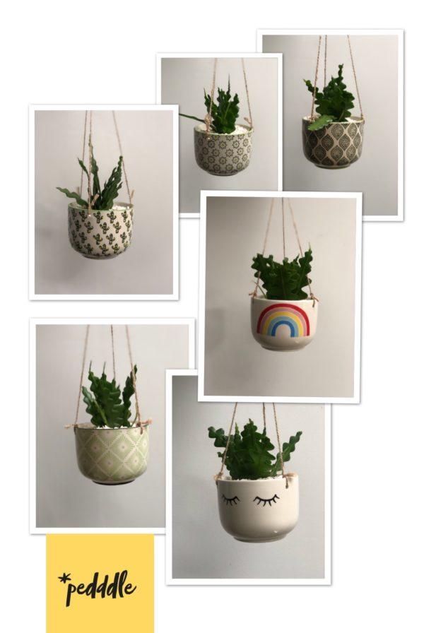 Ceramic hanging planters with fishbone cactus