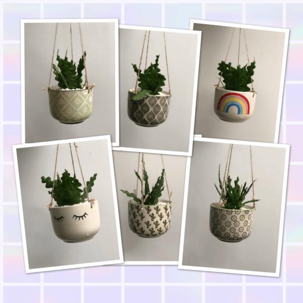 hanging planters photos