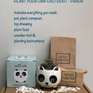 Plant your own cactus kit - Panda