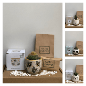Plant your own cactus kit - busy bees cactus