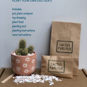 plant your own terracotta daisy kit