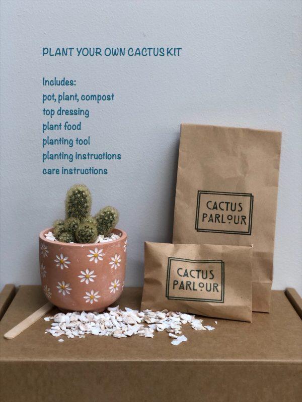 plant your own terracotta daisy kit