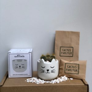 Plant your own cactus kit - cat cactus