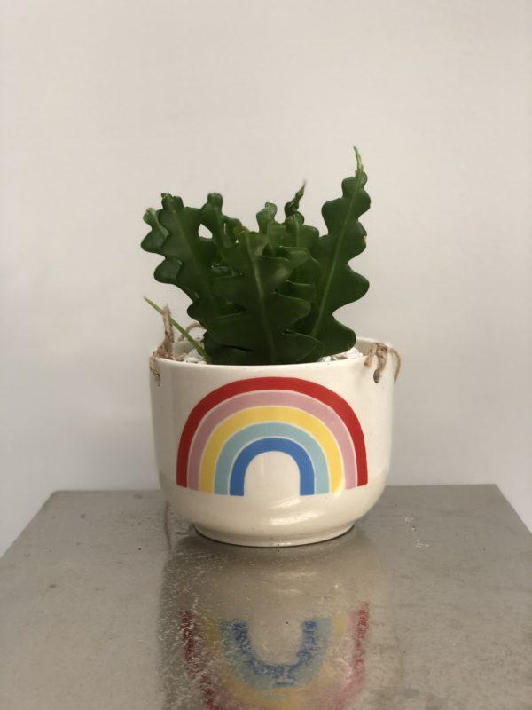 hanging planter rainbow
