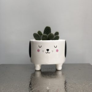 Barney the Dog cactus