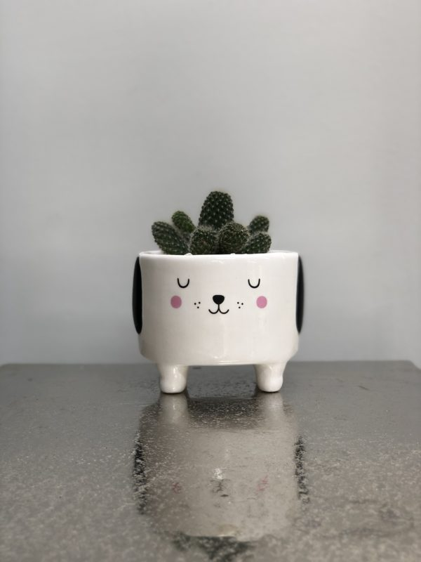 Barney the Dog cactus