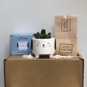 Barney the Dog plant your own Cactus kit