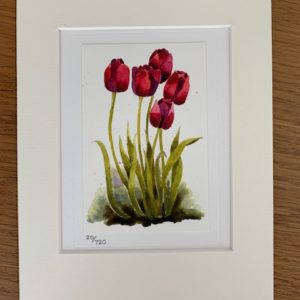 Tulips of Confidence gift card and white mount