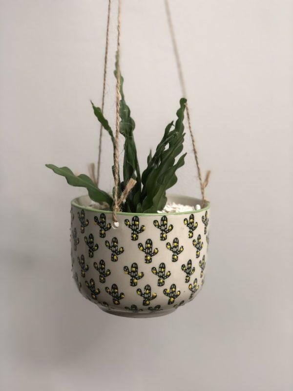 hanging planter Cacti